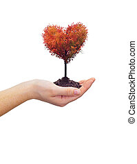 cuore, donna, albero, tenendo mano