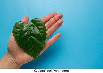 cuore, foglia, donna, forma, verde, mani