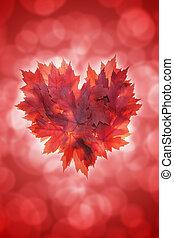 cuore, foglie, forma, acero, fondo, rosso