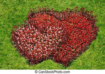cuore, simbolo, fiori, erba