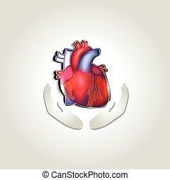 cuore, simbolo, salute, umano, cura