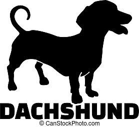 dachshund, razza, nome