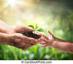 dare, -, nuovo, protezione, bambino, generazione, vecchio, ambiente, pianta, uomo, giovane