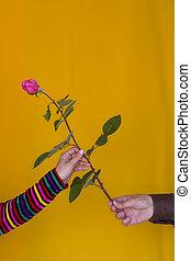 dare, rosa