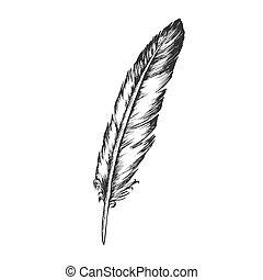 decorativo, volare, elemento, vettore, penna, uccello