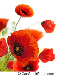decorazione, -, fiori, papaveri, floreale, angolo, bordo, disegno