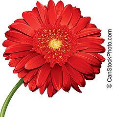 dettagliato, fiore