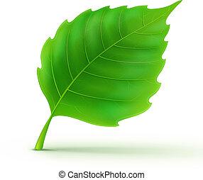 dettagliato, foglia verde