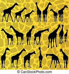 dettagliato, silhouette, giraffa, fondo, vettore