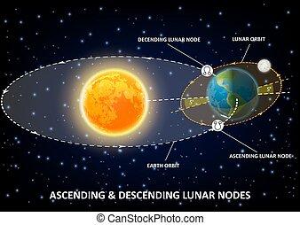 diagramma, educativo, manifesto, vettore, lunare, infographics, nodi