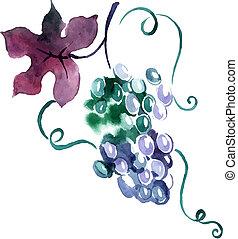 dipinto, acquarello, grape., vettore, illustrazione