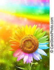 dipinto, differente, colori, girasole