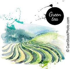 dipinto, tè, illustrazione, mano, acquarello, vettore, disegnato
