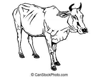 disegnato, vettore, mucca, illustrazione, mano