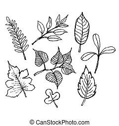 disegno, foglia, schizzo, illustrazione