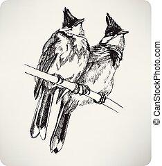 disegno, illustrazione, uccelli, due, vettore, mano, ramo