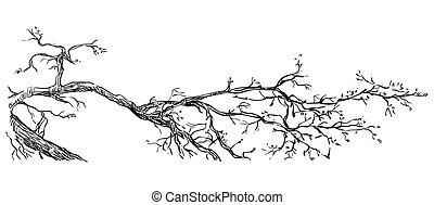 disegno, vettore, ramo, mano
