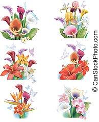 disposizione, fiori tropicali