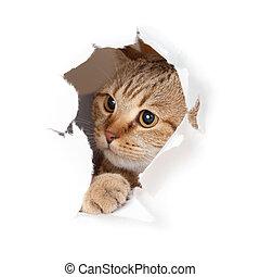 divertente, buco, carta, gatto