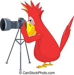 divertente, photographer., parrot.