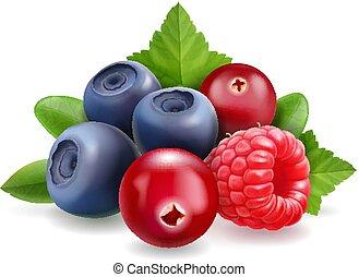 dolce, illustrazione, realistico, vettore, foresta, mirtillo, berry., mirtillo, lampone, 3d