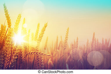 dorato, arte, soleggiato, campo, frumento, giorno