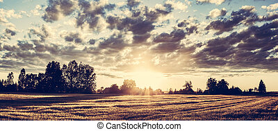 dorato, frumento, campagna, panorama, campo, sunset.