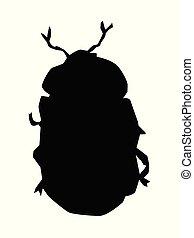 dorato, silhouette, scarabeo