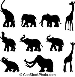 elefanti, giraffa, mommoth