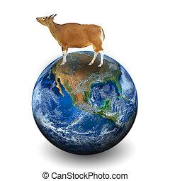 elementi, mucca, ammobiliato, questo, immagine, nasa, terra
