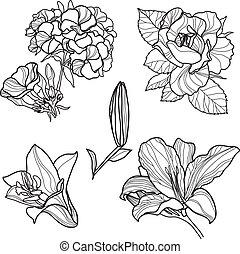 elementi, progetto serie, floreale