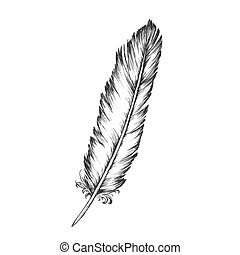 elemento decorativo, vettore, monocromatico, penna, uccello