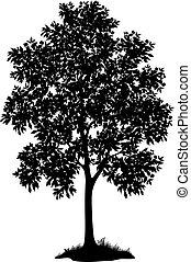 erba, albero, silhouette, acero