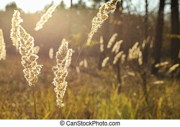 erba, alto, testo, spazio, su, secco, chiudere, foresta