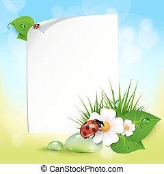erba, fiori, gocce rugiada, coccinella