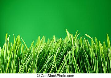erba, fondo, natura