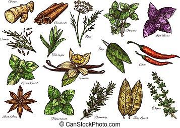erba, fresco, condimento, nome, spezia, schizzo