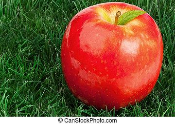 erba, mela, foglia, relativo, rosso