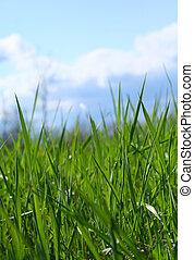 erba selvaggia