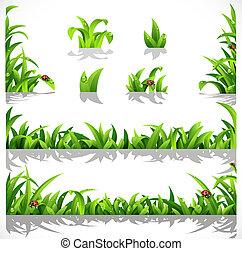 erba verde, lussureggiante, rugiada