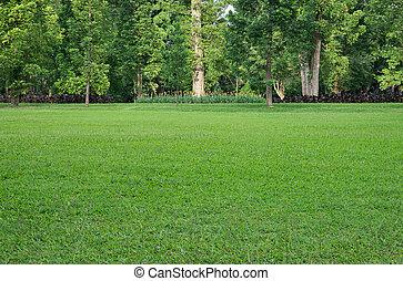 erba zona, albero