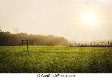 erba zona, cielo, verde, mattina