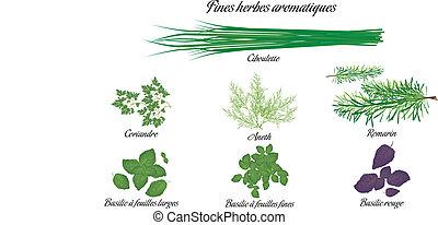 erbe, aromatico, francese, manifesto