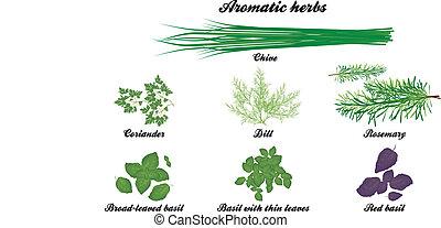 erbe, aromatico, manifesto