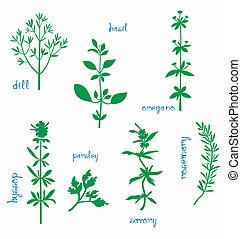 erbe, aromatico