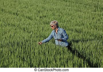 esaminare, pianta, frumento, agricoltura, campo, contadino