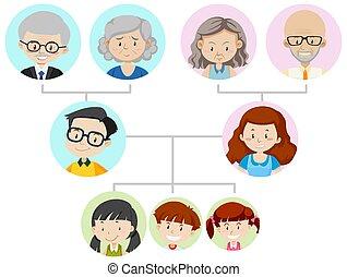 esposizione, famiglia, diagramma, albero, tre generazione
