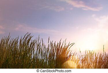estate, arte, tramonto, fondo, contro, cielo, astratto, fresco, erba