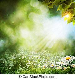 estate, astratto, fiori, sfondi, margherita