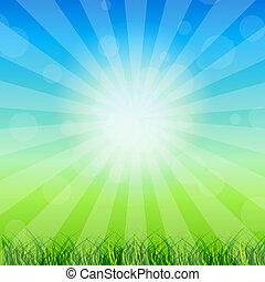estate, camomilla, illustration., sky., astratto, soleggiato, contro, vettore, fondo, erba